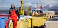 Islandia se encomienda al bacalao | Economía | EL PAÍS