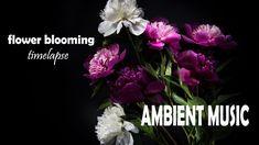 Un caleidoscopio di colori, forme, germogli, fiori e infiorescenze. Tre ore di rilassanti e meravigliose fioriture in time lapse....