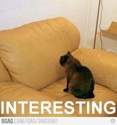 Interesting Cat, Part II
