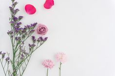White background with pretty flowers and pink petals Free Photo
