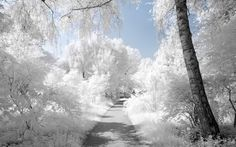 Looking for a Winter Fragrance? A photo gallery to inspire your choice of natural perfume, home fragrance, bath, body and organic skin care in Winter. Winter Szenen, I Love Winter, Winter Magic, Winter White, Winter Colors, Winter Season, Beautiful Landscape Wallpaper, Nature Wallpaper, Beautiful Landscapes