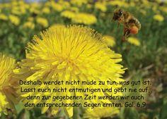 christliche Postkarte 33 - Galater, Blumen, Biene, Ermutigung - Bibel a la Carte - Christliche Karten
