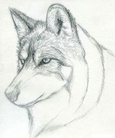 337 Best How To Draw Animals Images Drawing Techniques Draw