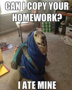 The words aren't funny, but let's just take a moment to realize that this dog is wearing clothes!!
