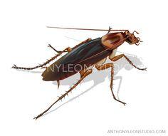 cock roach illustration