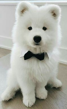 adorable cute puppies, lovely dogs! – Page 25 of 51 chiots mignons, chiens adorables, animaux adorables. Cute Little Animals, Cute Funny Animals, Funny Dogs, Samoyed Dogs, Pet Dogs, Dog Cat, Doggies, Chiweenie Dogs, Doggie Beds