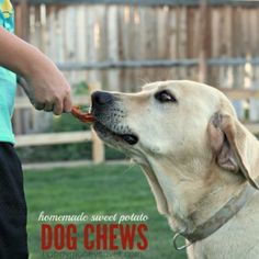 All Natural Homemade Dog Chews