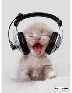 music-rocks - #cat #love #Music #Funny, #LOL, #Cute, #Fun, #Gif, #wtf, #Troll, #Hilarious, #laugh, #Comics, #meme, #humor, #rofl, #lmfao, #Sexy, #New, #haha,