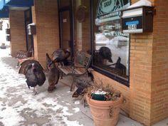 The NE MPLS turkeys
