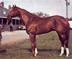 the horse secretariat - Secretariat was an American Thoroughbred racehorse, that in 1973 became the first U.S. Triple Crown champion in 25 years, setting race records in all three events in the Series—the Kentucky Derby,
