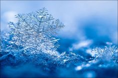Google Image Result for http://funguerilla.com/images/cool-amazing/snowflakes/snowflakes23.jpg