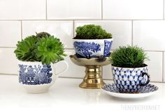 Teacup gardens and creative ways I enjoy tiny gardens inside and out! by The Inspired Room