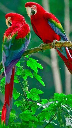 "Mug shot for Craig Buckner and his macaw, ""Bird."" (Multnomah County Sheriff's Office via AP) PORTLAND, Ore. – A macaw named ""Bird"" is an instant Cute Birds, Pretty Birds, Beautiful Birds, Animals Beautiful, All Birds, Tropical Birds, Exotic Birds, Colorful Birds, Exotic Animals"
