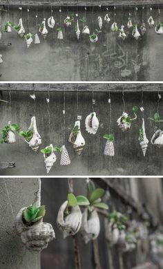 Shell as hanging terraria | Exclusive Beachlife pinned by mariellerobbe.com