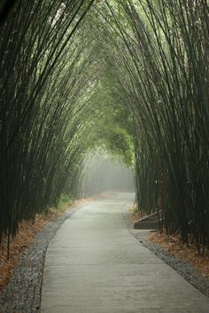 Wish to walk on this road :) - click on image to see more lovely nature images
