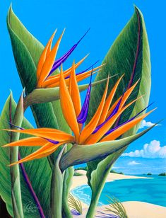 "Bird of Paradise Colored Pencil Art by Reina See My Birds of Paradise ""The MIX Gallery"" and L21 on http://www.artofncook.com/ #Prints4Sale"