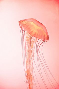 Even though I hate anything jellyfish- this is perfection.