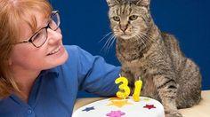 Gato mais velho do mundo acaba de completar 31 anos e ainda tem muitas vidas