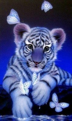 1000+ images about White Tiger on Pinterest | White tigers ... Cute Siberian Tiger Cubs