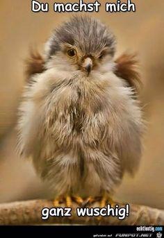lustiges Bild 'Wuschig.jpg' von Renilinz. Eine von 283 Dateien in der Kategorie 'Mit Tieren' auf FUNPOT.