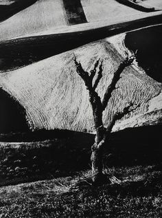 The work of Mario Giacomelli