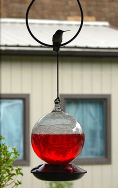 Ruby-Throated Hummingbird and feeder [Photo taken by J.Lewis at home in north central West Virginia with a 6 MP digital camera.]