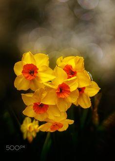 Flowers - Spring flowers