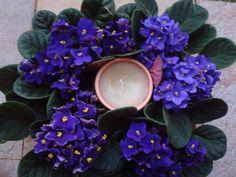 decoração casamento com violetas - Pesquisa Google