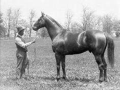 Man O' War, a great race horse