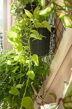 Dans le salon, la montée d'escalier devient un véritable jardin suspendu ! Plant Wall, Plant Decor, Elephant And Castle, Decoration Plante, Attic Conversion, Boho Designs, Flower Wall, Indoor Plants, House Plants