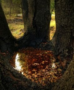 Forest stew created by the matron trees