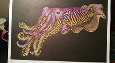 Cuttlefish Page Carol W