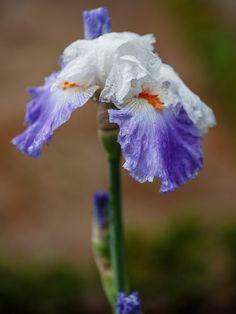 Iris parisien by José Luis Vega on 500px