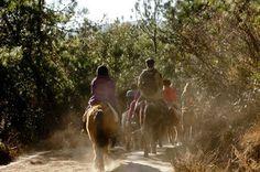 Istria top things to do - Horse Riding - Copyright blese #Istria #Croatia #Travel #Tourism #Europe #ebdestinations @ebdestinations #horseback
