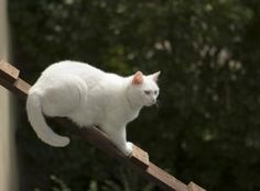 How to Make a Ladder for a Cat (12 Steps)
