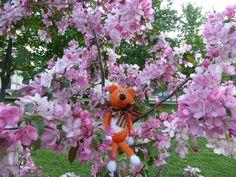 """""""Яблони в цвету - какое чудо, Яблони в цвету я не забуду!"""" Москва. Парк """"Березовая роща"""""""