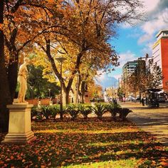 Beautiful part of the city - North Terrace, #Adelaide. #southaustralia