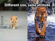 Big kittens...