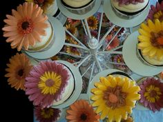 Daisy Wedding - CupCapes of Falmouth