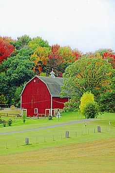 FALL IN THE COUNTRY: Fantastic nature moment with a variety of richly colored trees/greenery. Red barn at center.