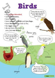 Animal Classifications Poster — Birds