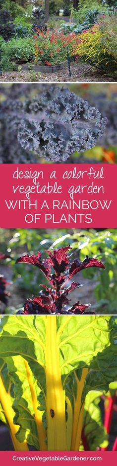 The best plants for creating a rainbow of color in your vegetable garden.