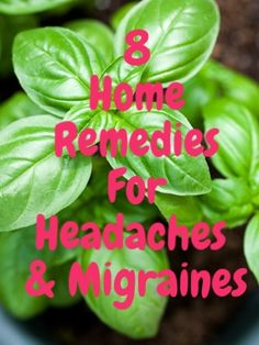 Basil oil for headache? Who knew!