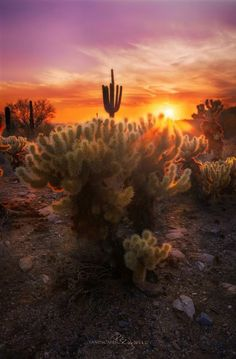 McDowell Mountain Sonoran Preserve, Arizona - Phil Shultz Landscapes