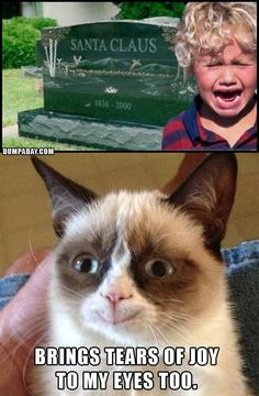 grumpy-cat-christmas-santa-is-dead-what-makes-grumpy-cat-happy, funny christmas pictures