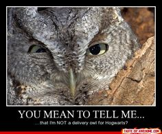 poor owl... He will never know the joy of delivering letters to the witches and wizards of Hogwarts...