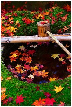 Fall in Daitoku-ji temple, Koto-in Zen Temple, Kyoto, Japan