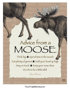 Each poster says: Advice from a Moose Think big Spend time in the woods Eat plenty of greens Hold your head up high Stay on track Keep your nose clean It's OK t Animal Spirit Guides, Spirit Animal, Moose Decor, Moose Art, Moose Antlers, Bull Moose, Moose Pictures, Moose Pics, Moose Lodge