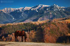 Adrian Petrisor - Photography: Last colours of autumn