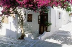 Bougainvillea doesn't need a trellis to grow. You can cultivate the plant in a number of ways, including as a tree.